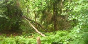 sommerlicher Wald in vollem Grün