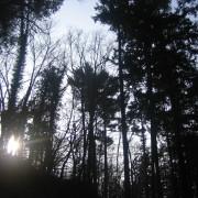 Sonne scheint im Wald