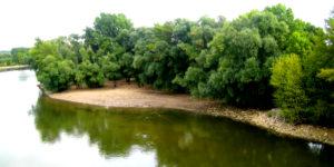 Uferstrand mit Bäumen