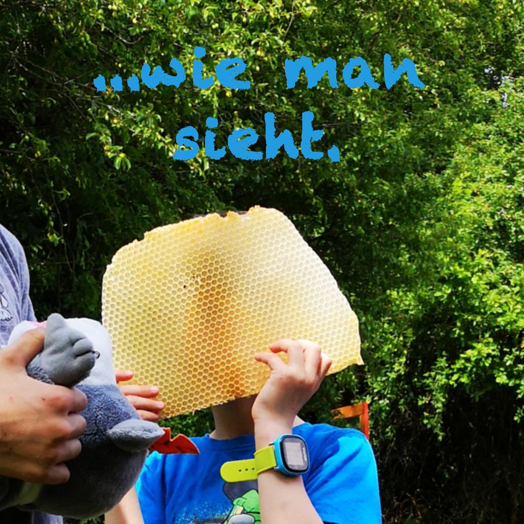 ein Junge riecht an einer Honigwabe