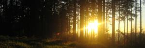 Trauerbegleitung in der Natur mit Insight Outside
